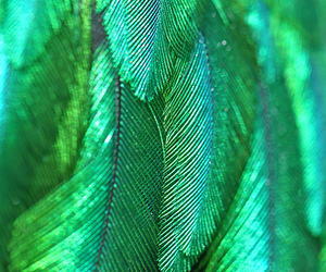 feathers, bird, and green image
