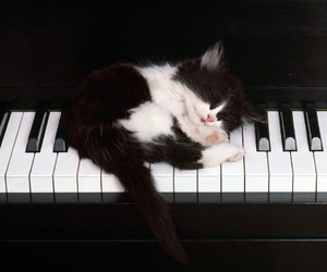 cat, piano, and kitten image