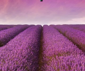 fields, pretty, and purple image