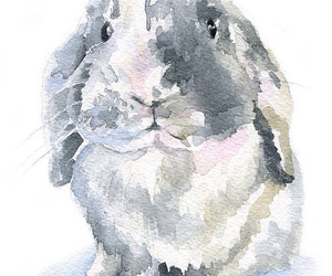 rabbit and art image