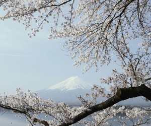 beautiful, landscape, and cherryblossom image