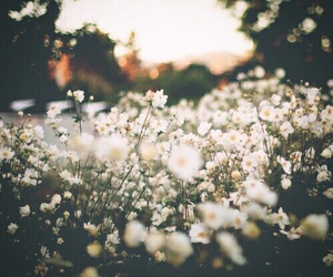 flowers, nature, and white image