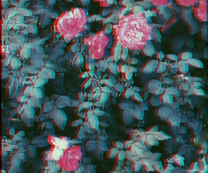 cool, flowers, and glitch image
