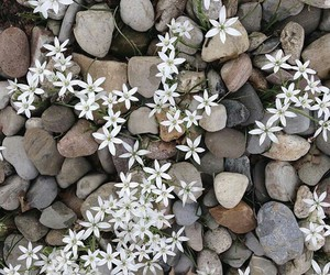 flowers, stone, and white image
