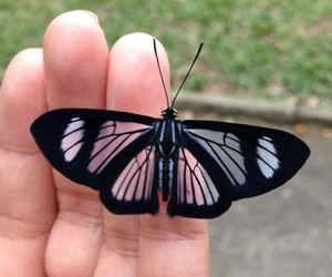 butterfly, black, and tumblr image