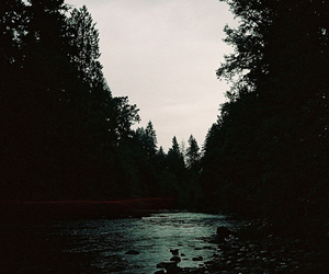 nature, indie, and forest image