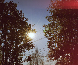 sun and trees image
