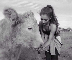 ariana grande, ariana, and animal image