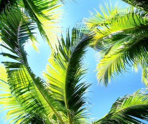 palms, tree, and green image
