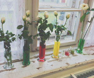 biology, colour, and flower image
