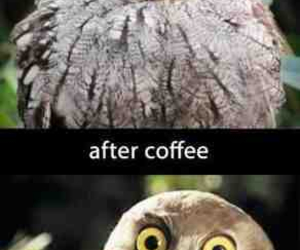 coffee, funny, and owl image