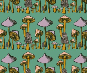 mushroom and wallpaper image