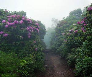 flowers, nature, and path image
