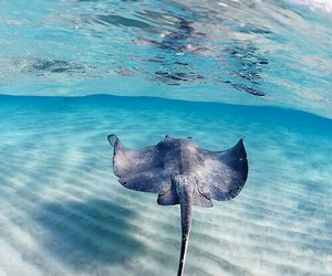 ocean, sea, and animal image