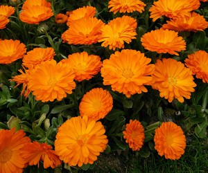 orange, flowers, and we heart it image