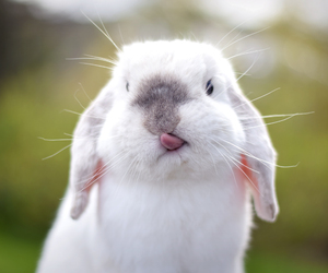 animal, rabbit, and pet image