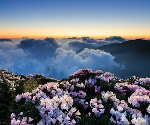 clouds, flowers, and nature image
