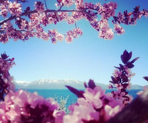summer, flowers, and amazing image