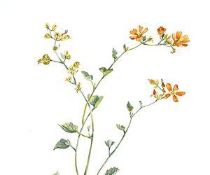 aquarela, draws, and flor image