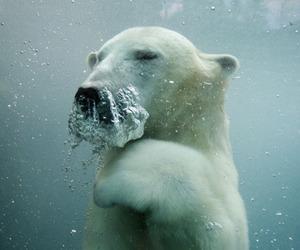 animal, water, and Polar Bear image