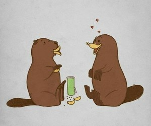 love, beaver, and funny image