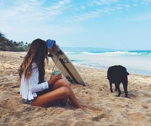 summer, dog, and beach image