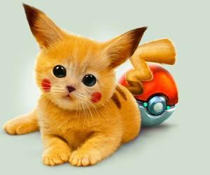 amarillo, cat, and pokemon image