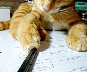 cat and study image