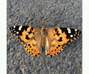 black, butterfly, and orange image