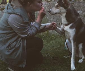 boy, Chick, and dog image
