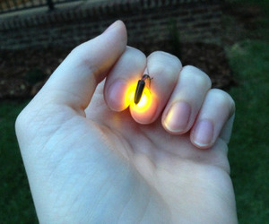 firefly, hand, and light image