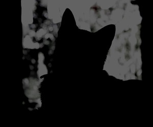 black and white, mystery, and cat black image