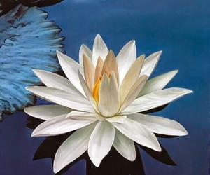 lotus blossoms image