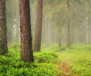 forest, woods, and nature image