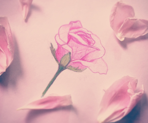 drawings, flower, and pink image