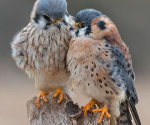 birds, nature, and falcons image