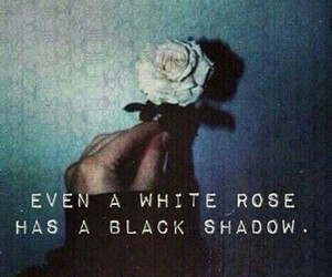 rose, shadow, and black image