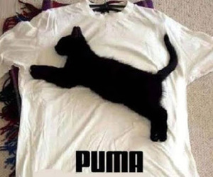 cat, puma, and funny image