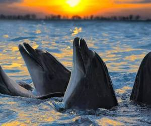 dolphins, sunset, and ekonomistica image