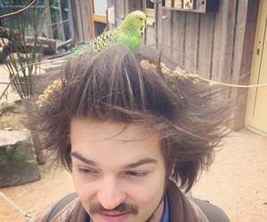 animal, bird, and guy image