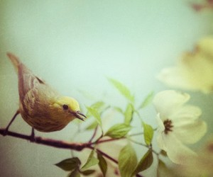 bird, flower, and pretty image