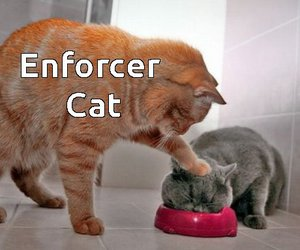 funny cats image