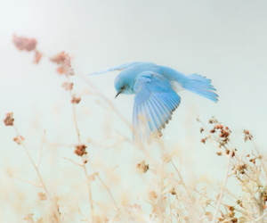 bird, blue, and green image