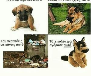 greek quotes dog image