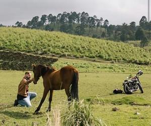 horse, travel, and wonderful image