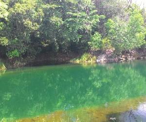 trees, green, and lake image
