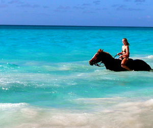 beach, horse, and tumblr image