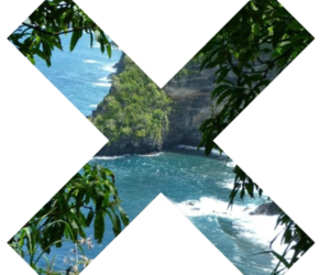 x, tropical, and paradise image