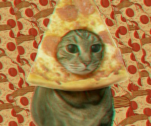cat, pizza, and we heart it image