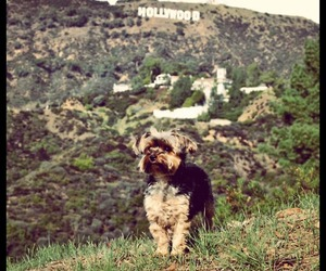 hollywood, californian, and love image